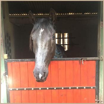 Horse-Headshot